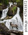 滝 景色 風景の写真 47543972