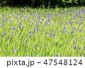 大田神社 47548124
