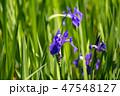 大田神社 47548127