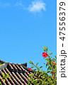 沖縄 竹富島 青空とハイビスカスと屋根瓦 47556379
