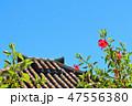 沖縄 竹富島 青空とハイビスカスと屋根瓦 47556380