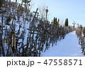 十字架の丘(リトアニア/シャウレイ) 47558571