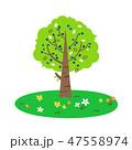 木と草花 47558974