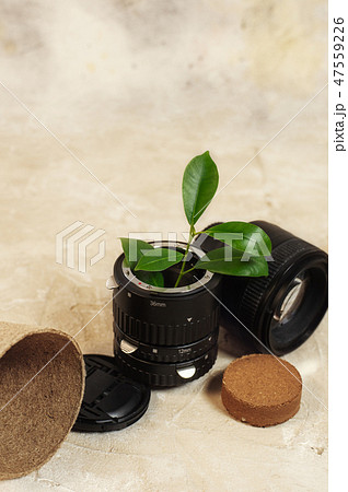 Growing green plants in used old photo camera lens and reuse recycle eco concept 47559226