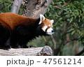 王子動物園 動物 哺乳類の写真 47561214