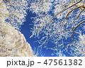 聖高原 霧氷 雪の写真 47561382