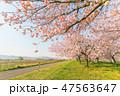 花 フラワー 日本の写真 47563647