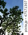 空と木 47571307