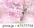 優しい春 47577738