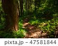 森 林 緑の写真 47581844