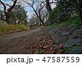 ニヶ領用水宿河原線、冬の情景 47587559