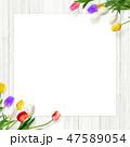 壁 チューリップ 花のイラスト 47589054