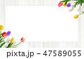 壁 チューリップ 花のイラスト 47589055