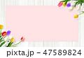 壁 チューリップ 花のイラスト 47589824