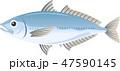 魚 アジ 白バックのイラスト 47590145