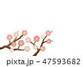 梅の花 梅 花のイラスト 47593682