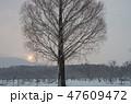 冬 風景 木の写真 47609472