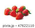 いちご フルーツ 果物の写真 47622110