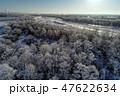 霧氷 冬 早朝の写真 47622634