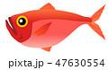 金目鯛 魚 白バックのイラスト 47630554