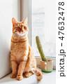 ねこ ネコ 猫の写真 47632478