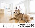 柴犬と夫婦 47638849