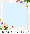 壁 チューリップ 花のイラスト 47643372