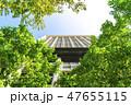 高層ビル ビル 新緑の写真 47655115