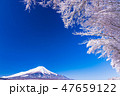 富士山 富士 積雪の写真 47659122