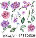 あじさい アジサイ 紫陽花のイラスト 47660689