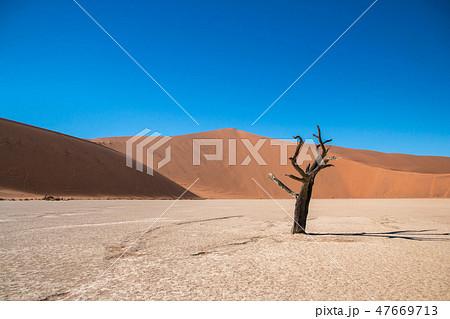 ナミビア ナミブ砂漠 死の沼デッドフレイ 47669713