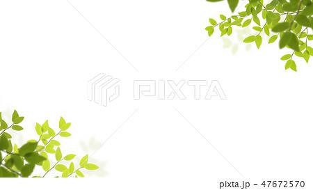 背景-新緑-白バック 47672570