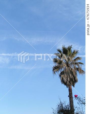 青い空にヤシの木 47675934