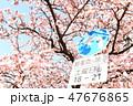桜 47676865