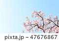 桜 47676867