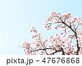 桜 47676868