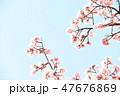 桜 47676869