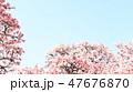 桜 47676870