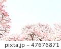 桜 47676871