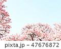 桜 47676872