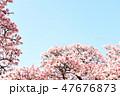 桜 47676873