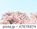 桜 47676874