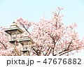 桜 47676882