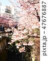 桜 47676887