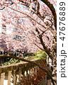 桜 47676889