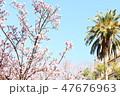 桜 47676963
