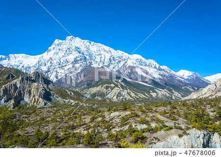Snowy mountains and coniferous forest, Nepal. 47678006