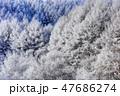 聖高原 霧氷 樹氷の写真 47686274