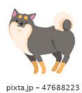 柴犬 犬 ポーズのイラスト 47688223