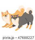 柴犬 犬 ポーズのイラスト 47688227